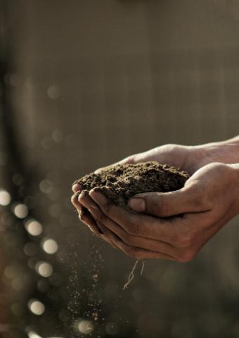 לגדל עגבניות בלב תל אביב: המדריך השלם לגינות שיתופיות