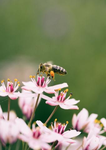 האם האנושות בסכנת הכחדה עקב התמוטטות מושבות דבורי הדבש? איך זה עלול להשפיע על הכלכלה ועל התזונה שלנו?